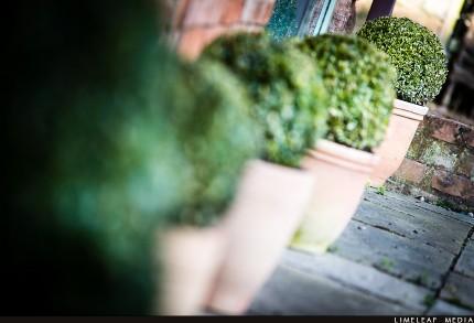 Green round bushes