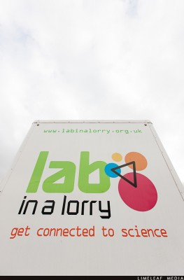 Lab in a lorry back